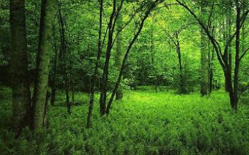 Los árboles se adaptan al cambio climático