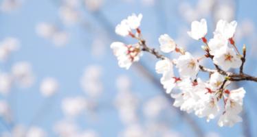 La primavera como la conoces está a punto de cambiar