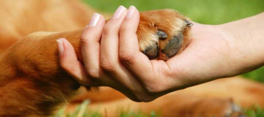 Un estudio hecho en Estados Unidos analiza los beneficios de tener una mascota en casa