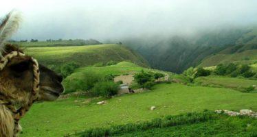 Yungas: Flora y fauna únicas en el mundo en plena selva tucumana
