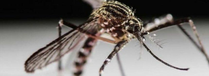 El zika podría haber llegado a Sudamérica desde Polinesia durante la Copa Confederaciones