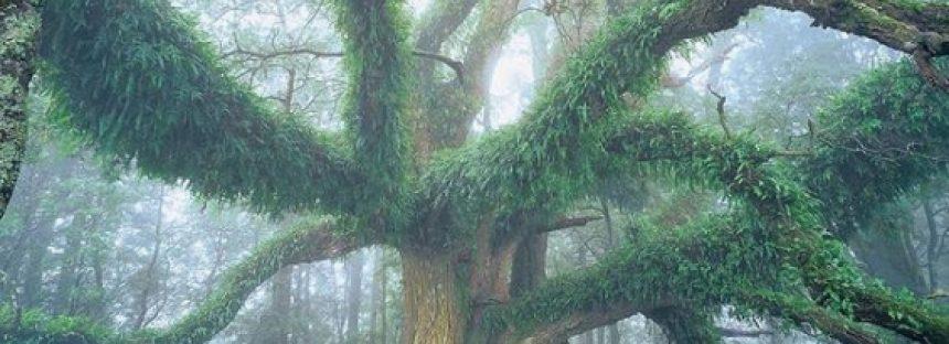 """Se celebra el """"Día Internacional de los Bosques"""""""