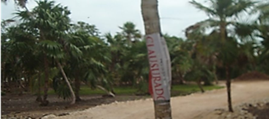 CLAUSURA PROFEPA PREDIO EN QUINTANA ROO POR REMOCIÓN Y AFECTACIÓN EN 0.43 HECTÁREAS DE PALMA CHIT