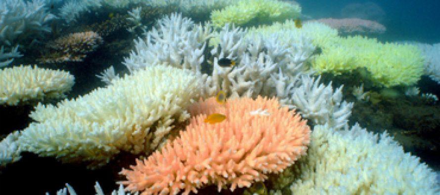 El calor causa más blanqueamiento en la Gran Barrera de Coral