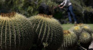 Reproducción, opción para conservar plantas endémicas