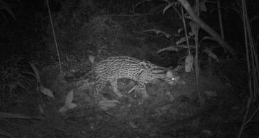 Científicos logran imágenes inéditas de especies del Amazonas peruano