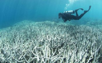 Gran Barrera de Coral australiana, en peligro de extinción