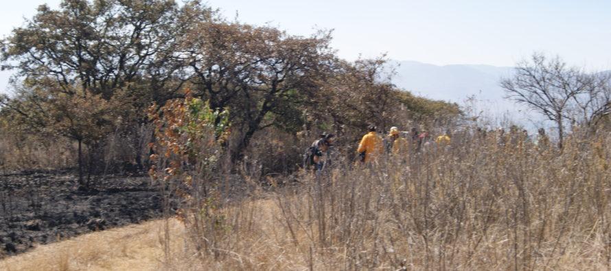 Inicia COFOM investigación por incendio forestal en el cerro del Quinceo