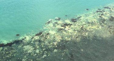 El 95% de la sección más prístina de la Gran Barrera de Coral australiana, afectada de blanqueamiento
