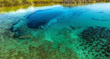 Aporta biodiversidad en Cuatro Ciénegas claves sobre evolución