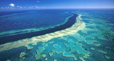 El mundo científico critica a Australia por descuidar la Gran Barrera de Coral