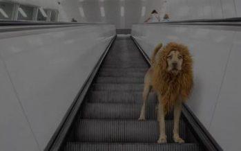 """El """"perro león"""" que pasó de ser callejero a famoso"""