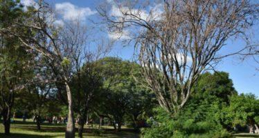 ¿Ciudad dónde hay miles de árboles muertos en pie?