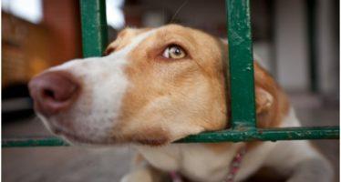 """Madrid busca el """"sacrificio cero"""" en las perreras"""