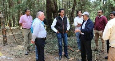 La mariposa monarca tendría nuevo santuario en Maravatío, Michoacán