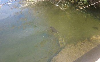 Lanzan un perro al río atado con hormigón en Benifairó de la Valldigna