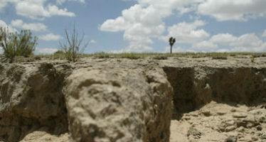 Universidad de Tamaulipas busca recuperar suelos agrícolas