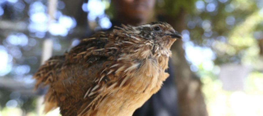 Zimbabue venderá animales salvajes para obtener recursos