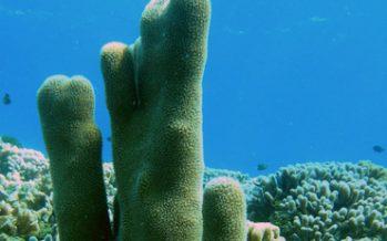 Muerte de corales pone en riesgo supervivencia de peces
