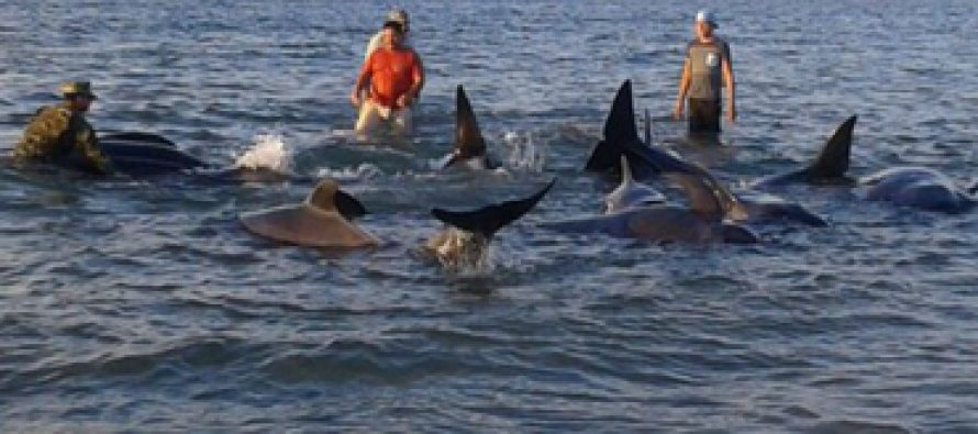 Mueren 24 ballenas varadas en Baja California
