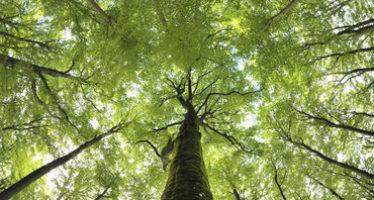 Bosques secundarios, arma contra el cambio climático