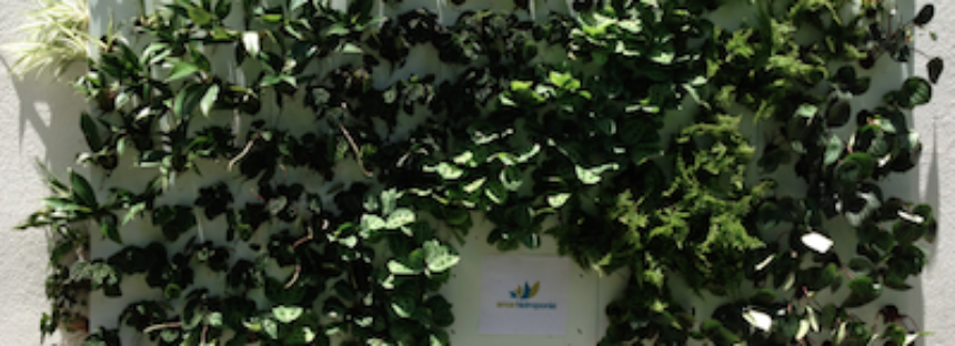 La empresa Amar Hidroponia inicia cursos de cultivo hidropónico