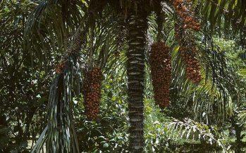 Confirmado: El hombre pone en riesgo la conservación de la biodiversidad en las reservas naturales