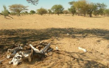 África soportará olas de calor extremas para 2040