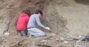 Hallaron los restos de un mastodonte de casi un millón de años