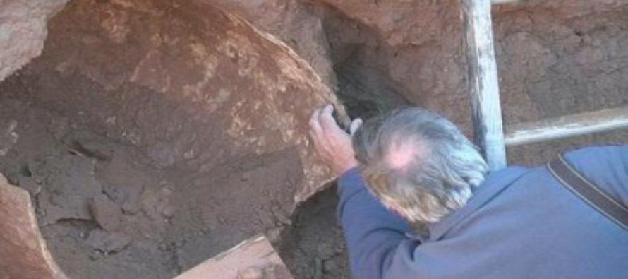 Confirman el hallazgo de fósiles de un Gilptodonte en la ciudad de Alberti