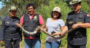 Liberan animales silvestres a su hábitat natural en San Martín