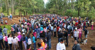 Cientos de michoacanos se sumaron a la reforestación en el Cerro de la Cruz