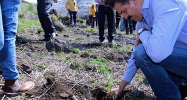 Rellenos sanitarios de Michoacán contarán con cercos vivos