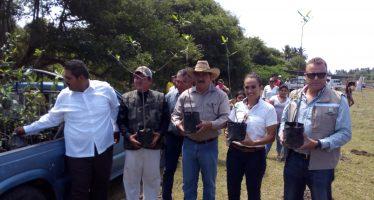 SEMARNACC se suma a campaña de reforestación en Lázaro Cárdenas