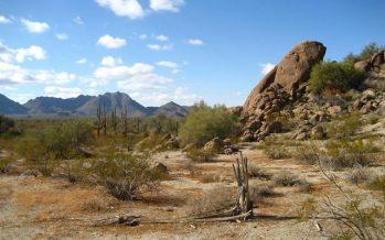El desierto de Sonora, una 'máquina de matar'