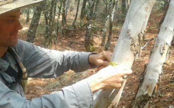 Estudian ecosistemas de bosques de Oaxaca para evaluar impacto del cambio climático