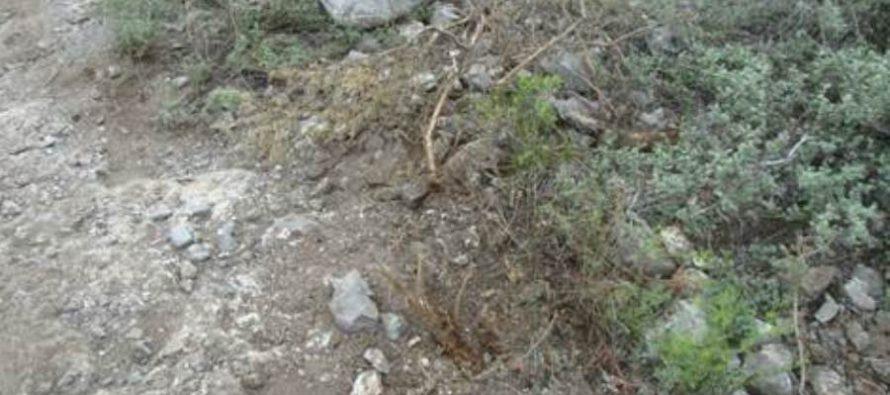 Ciclistas desmontan ilegalmente en el área natural protegida Cumbres de Monterrey