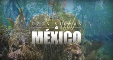 Manglares en México