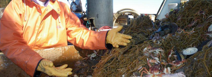 Hallan nueva especie de pez en Alaska