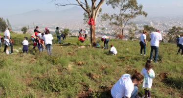Reforestan con 8 mil arbolitos La Loma de Santa María, un ANP de 170 hectáreas|