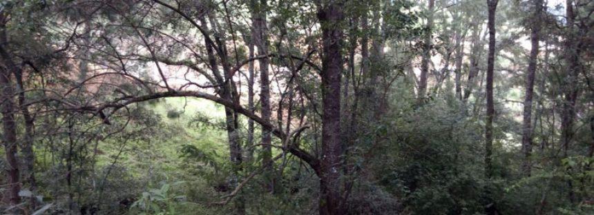 Parque Nacional Bosencheve en Estado de México, Regulador hídrico de la zona