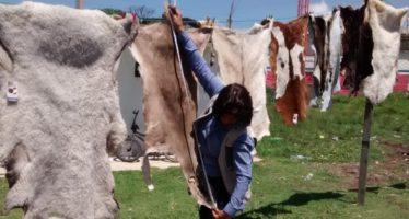 Aseguran restos venado y coatí silvestres en Tlaxcala