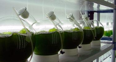 Las microalgas, alternativa para afrontar la crisis ambiental, energética, alimentaria y de salud, asegura investigadora mexicana