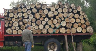 Intensifican tareas de inspección y vigilancia forestal