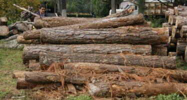 REALIZAN AUTORIDADES OPERATIVO FORESTAL EN TINGAMBATO