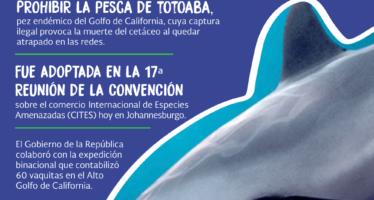 CITES apoya a México para salvar a la vaquita marina