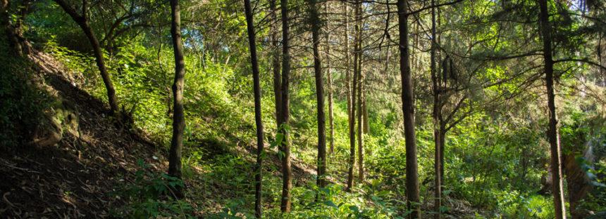 Parque Nacional Fuentes Brotantes de Tlalpan