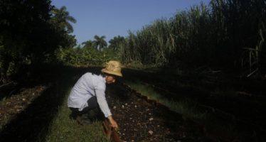 Brechas de género persisten en el acceso a la tierra en Cuba