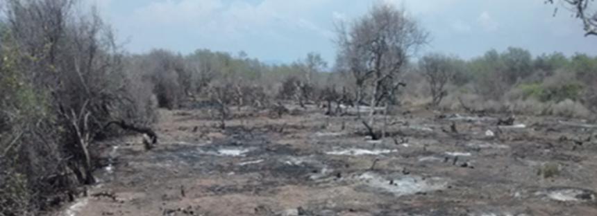 En el Santuario Playa Ceuta en Sinaloa, detiene daño a ecosistema costero