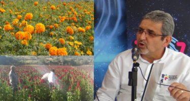 Se comercializarán 993 mil manojos de flores por la noche de muertos: Sedrua